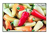 Santa Fe Grande Hot Pepper Seeds, 50+ Premium Heirloom Seeds, Chili Peppers, (Isla's Garden Seeds) Non Gmo Organic Seeds, 90% Germination, Highest Quality! Photo, new 2020, best price $5.99 review