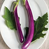 David's Garden Seeds Eggplant Machiaw NR5241 (Purple) 25 Non-GMO, Hybrid Seeds Photo, new 2020, best price $7.95 review