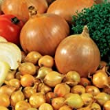 Park Seed Candy Hybrid Onion Seeds Photo, new 2020, best price $6.50 review
