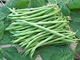 100 Seeds Landreth String-less Bush Bean, Organically Grown Heirloom Bean. Great Flavor ! Photo, new 2020, best price $1.80 review