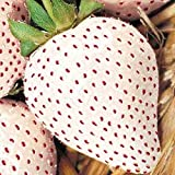 WHITE SOUL STRAWBERRY 100 SEEDS Fragaria vesca Containers Heirloom Non-GMO USA Photo, new 2020, best price $1.94 review