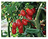 David's Garden Seeds Tomato Grape Red Pearl QX6671 (Red) 25 Non-GMO, Organic Seeds Photo, new 2020, best price $12.95 review