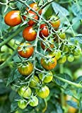 Moby Grape Tomato Seed Photo, new 2020, best price $6.99 review