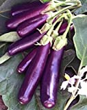 Eggplant , Long Purple Eggplant seeds, Heirloom, Organic, Non Gmo, 25 seeds, Garden Seed, Long Purple, Heirloom, Organic, Non Gmo, 25+seeds, Garden Seed Photo, new 2020, best price $1.30 review