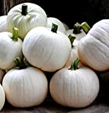 Cotton Candy Pumpkin 10 Seeds - NEW Photo, new 2020, best price $3.95 review