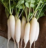 David's Garden Seeds Radish White Icicle UY1277 (White) 200 Organic Heirloom Seeds Photo, new 2020, best price $7.95 review
