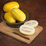 David's Garden Seeds Fruit Melon San Juan DY3415 (Yellow) 25 Non-GMO, Hybrid Seeds Photo, new 2020, best price $9.95 review