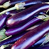 David's Garden Seeds Eggplant Long Purple SL111 (Purple) 50 Non-GMO, Heirloom Seeds Photo, new 2020, best price $6.95 review