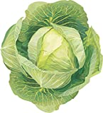 #1307 *MONSTER GIANT RUSSIAN CABBAGE* 150 SEEDS Photo, new 2020, best price $2.50 review