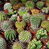 Outsidepride Succulent Cactus Plant Seed Mix - 1000 seeds Photo, new 2020, best price $6.49 review
