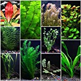 10 Species Live Aquarium Plants Package - Anacharis, Swords, Vallisneria and more! Photo, new 2020, best price $29.95 review