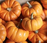 Jack Be Little Pumpkin Seeds - Mini Pumpkins - 10+ Premium Heirloom Seeds - ON SALE! - (Isla's Garden Seeds) - Non Gmo - 85% Germination! - Total Quality Photo, new 2018, best price $6.99 review