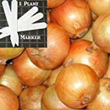 Heirloom Sweet Spanish Yellow Onion Seeds 300 Seeds Upc 646263363201 + 1 Plant Marker Photo, new 2018, best price $5.19 review