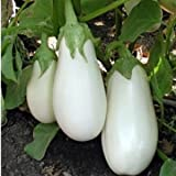 Eggplant seeds Iceberg Heirloom Vegetable Seed from Ukraine Photo, new 2018, best price $1.99 review