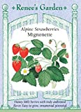 Strawberry, Alpine, Mignonette Photo, new 2019, best price $3.19 review