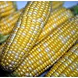 Seeds and Things Peaches and Cream Sweet Corn - 50 Seeds Photo, new 2019, best price $1.91 review