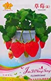 Gardens The Four Seasons of Strawberry Seeds 100pcs only Original Pack Photo, new 2019, best price $7.83 review