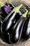 Heirloom Florida Market Eggplant Seeds by Stonysoil Seed Company Photo, new 2018, best price $7.50 review