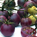 Park Seed Chocolate Cherry Tomato Seeds Photo, new 2018, best price $4.95 review