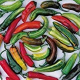David's Garden Seeds Pepper Hot Fish D46518 (Multi) 50 Heirloom Seeds Photo, new 2018, best price $8.49 review