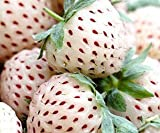 White strawberry - Pineapple Strawberry - 30 seeds Photo, new 2018, best price $5.90 review