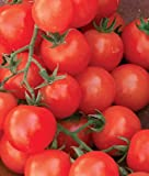 Cherry Sweetie Organic Tomato 200 Seeds By Jays Seeds Photo, new 2018, best price $5.99 review