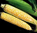 Park Seed Sweet Temptation Hybrid (SE) Corn Seeds Photo, new 2019, best price $6.95 review