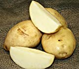 5 lb. SEED POTATOES - Kennebec Russet - Organic - ORDER NOW for FALL PLANTING Photo, new 2018, best price $13.49 review