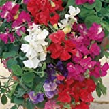 Outsidepride Annual Sweet Peas Mix - 250 Seeds Photo, new 2018, best price $5.49 review