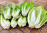 150+ ORGANICALLY Grown Michihili Chinese Cabbage Seeds, Heirloom Non-GMO, aka Napa, Celery Cabbage, siew Choy, Won bok, sawi, hakusai, baechu, pak GAHD kow, CAI bac Thao, 70 Days. Ships from USA Photo, new 2019, best price $2.49 review