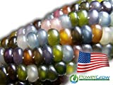 Glass Gem Corn Seeds (100 Seeds) - USA Grown by PowerGrow Systems Guaranteed to Grow Photo, new 2019, best price $5.25 review
