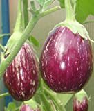 Eggplant seeds Matrosyk Heirloom Vegetable Seed from Ukraine early Photo, new 2018, best price $1.99 review
