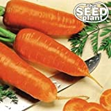 Chantenay Red Core Carrot Seeds - 250 Seeds Non-GMO Photo, new 2019, best price  review