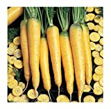 David's Garden Seeds Carrot Yellowstone SL9374 (Yellow) 500 Open Pollinated Seeds Photo, new 2020, best price $6.95 review
