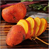Package of 600 Seeds, Golden Detroit Beet (Beta vulgaris) Non-GMO Seeds By Seed Needs Photo, new 2018, best price $2.85 review