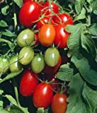 Juliet Grape Tomato 15 Seeds - High yields! Photo, new 2018, best price $1.80 review