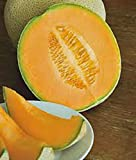 CANTALOUPE SEED​, HALES BEST JUMBO, HEIRLOOM, ORGANIC, NON GMO, 25+ SEEDS, MELON Photo, new 2019, best price $1.30 review
