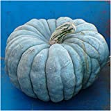Package of 10 Seeds, Blue Moon Pumpkin (Cucurbita maxima) Non-GMO Seeds by Seed Needs Photo, new 2018, best price $3.50 review