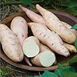 Sweet Potato, Bonita.The sweetest we've ever tasted.Fruit and Vegatable seeds.For Home Garden Plants. High Yielding--10seeds Photo, new 2018, best price $2.38 review