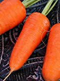 Red Cored Chantenay Carrot Seed 1 LB ~320,000 seeds Photo, new 2018, best price $17.88 review