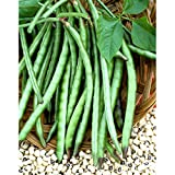 David's Garden Seeds Southern Pea (Cowpea) California Blackeye #46 8834 (Green) 100 Non-GMO, Heirloom Seeds Photo, new 2019, best price $7.95 review