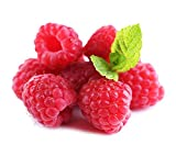 2000Pcs Red Raspberry Seeds Fruit Plant Juicy Delicious Rubus Idaeus Bush BD108 Photo, new 2020, best price $10.99 review