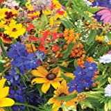 David's Garden Seeds Wildflower Butterfly Hummingbird Mix SS30062A 500 Open Pollinated Seeds Photo, new 2019, best price $8.95 review