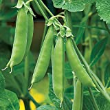 Burpee Sugar Snap Pea Seeds  300 seeds Photo, new 2019, best price $8.49 review