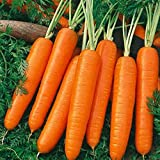 Carrot Scarlet Nantes Non GMO Heirloom Old Time Favorite Sweet Juicy Vegetable 100 Seeds by Sow No GMO® Photo, new 2019, best price $2.69 review
