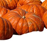 Atlantic Giant Pumpkin Seeds - These Are the Record Breaking Pumpkins! Photo, new 2020, best price $10.99 review