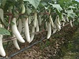 Pure White, Long Eggplant Seeds -100 Seeds- Very Productive - Organic ! Photo, new 2018, best price $2.00 review
