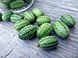 100 Mexican Sour Gherkin Cucumber,Seeds ! looks like miniature watermelons Photo, new 2018, best price $4.95 review