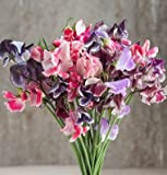 David's Garden Seeds Flower Sweet Pea Spencer Ripple Formula Mix SL1807 (Multi) 50 Open Pollinated Seeds Photo, new 2018, best price $8.75 review