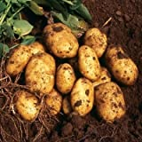 SEED POTATOES - 1 lb. Nicola Organic Grown Non GMO Virus & Chemical Free Ready for Spring Planting Photo, new 2018, best price $8.24 review